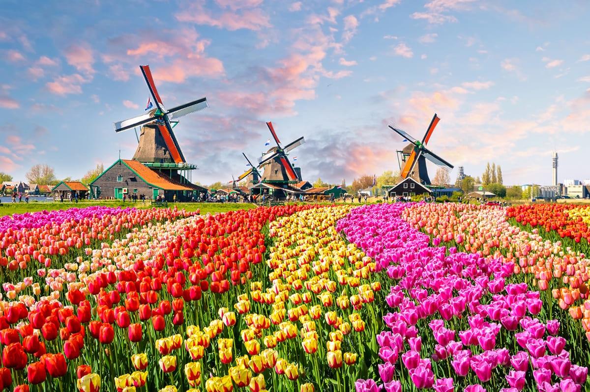 荷蘭 航空券