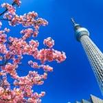 美麗的櫻花與晴空塔